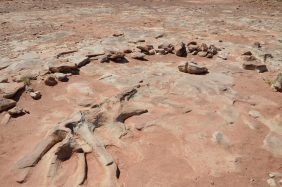 ouest usa dinosaur2